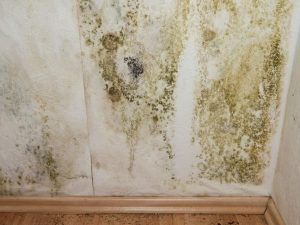 Trusted Water Leak Detection Advice